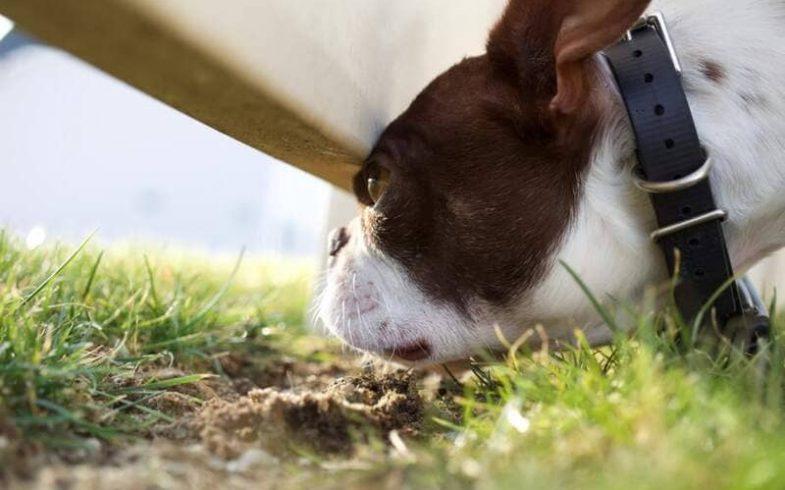 Clôture anti-fuge pour chien : bonne idée ?